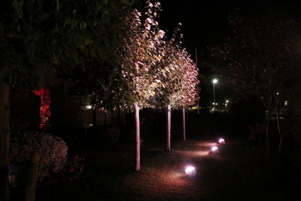 bomen uitlichten